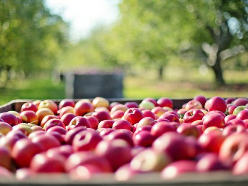 Pompy przy płukaniu warzyw i owoców